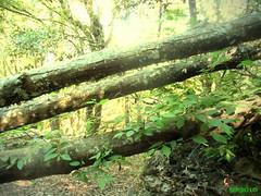 TRONCHI (SergioLoi) Tags: sardegna italy verde green foglie italia sardinia fiume natura bosco barbagia esterzili