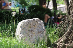 IMG_1441 (ShellyS) Tags: nyc newyorkcity rocks manhattan parks unionsquare unionsquarepark