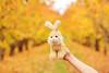 orchard rabbit (\_/) (Le Fabuleux Destin d'Amélie) Tags: autumn newzealand tree apple leaves child roadtrip orchard otago centralotago cromwell
