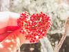 <3 (lainecris12) Tags: love nature nice shine heart bokeh designer amor natureza minimalismo valentinesday lightroom diadosnamorados vescocam