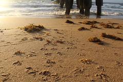IMG_0061 (alannahberkeley) Tags: pompanopier pier beach footprints birdtracks