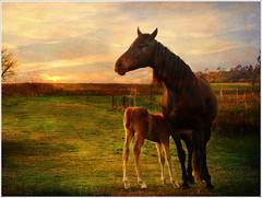 Madre no hay ms que una (Geli-L) Tags: naturaleza textura animal caballo lac asturias loveit campo potro yegua lacaridad platinumheartaward fz28 artistictreasurechest platinumpeaceaward blinkagain bestofblinkwinners blinksuperstars lenabemannasoe