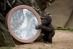 Winston_002 (ChokeOnIt Global) Tags: zoo sandiego safaripark