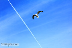 The Perfect Timing (2/4) ( SUMAYAH  ) Tags: blue sky canon landscape photography eos perfect edmonton the timing 550d