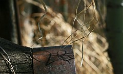 rusty hub (withrow) Tags: wheel hub wagon spring shadows oldgrass