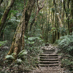 walk (sue.h) Tags: park trees forest path australia national queensland springbrook brrrrniceandchilly