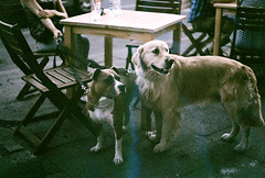 (MilkyAir) Tags: film dogs analog polska krakw prakticamtl3 milkyair