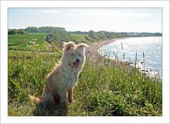 Un petit coin de paradis (BegMeil44) Tags: balticsea ostsee baltique blekendorf hohwachterbucht gripik sehlendorferstrand