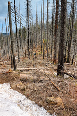 Hiking through a burnt forest (Matthew Singer) Tags: washington bluemountains backpacking wenahatucannonwilderness umatillanationalforest