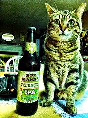 365 Days Project 320/365:  A cat and her beer. (_BuBBy_) Tags: cat her beer hebrew chosen ipa hop manna puss shmaltz brewing company india pale ale
