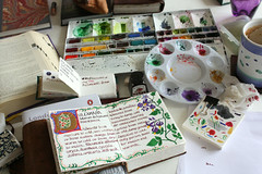 Studio Mess (noriko.stardust) Tags: plant art illustration watercolor notebook studio botanical gold leaf drawing d illustrated profile sketching picture blogger sketchbook medieval illuminated nightshade letter watercolour lettering caligraphy manuscript herb herbal solanum remedy homeopathy dulcamara herbalism illlumination homoepathic
