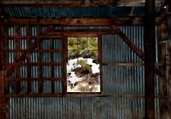 JKN©-BW-0970 (John Nakata) Tags: architecture belmontmill building bush bw11 corrugatedmetal freedom ghosttown mining nv portal snow tree view window