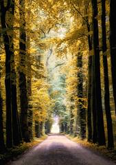 golden path (Zino2009 (bob van den berg)) Tags: autumn trees light holland color colour nature yellow standing gold soft mood path walk atmosphere dreamy sundayafternoon ps6 bobvandenberg zino2009