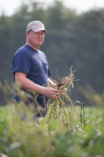 Farmer Scouting & Inspecting Weeds