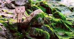 Danbo's adventure time ! (Alice Luk.) Tags: cute nature canon actionfigure japanese 50mm amazon little adventure kawaii figure wonderland creature danbo 600d danboard canon600d danbomini