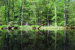 Havelgreen_6933 (kurbeltreter20) Tags: green river wilderness havel wasserwandern mritznationalpark