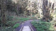 20160331_092641 (ks_bluechip) Tags: creek evans trails preserve sammamish usa2106
