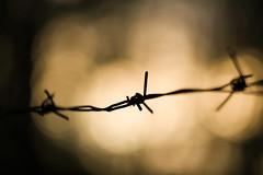 No trespassing (bnq.hendrix) Tags: macro wire barbed sunbeams