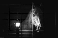 Apollo by Lamplight (Jen MacNeill) Tags: light blackandwhite bw horse lamp night eyes stall spooky stable bnw equine
