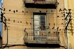 count the birdies (Marlis1) Tags: birds pigeons marlis1 tortosacataluaespaa panasonictz71