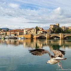 (IrreBerenT) Tags: travel bridge sea bird castle landscape cityscape gaviota cantabria sanvicentedelabarquera travelspain castillodelrey irreberentenataliaaguado