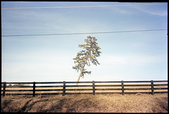 (Ansel Olson) Tags: tree film virginia olympus stylus pointandshoot roadside somewhere portra epic 160 route6
