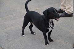 DSC_0019 (rlg) Tags: dog white black male animal mammal march mutt saturday richard 24 2012 fpr 0324 201203 20120324 nikond5100 03242012