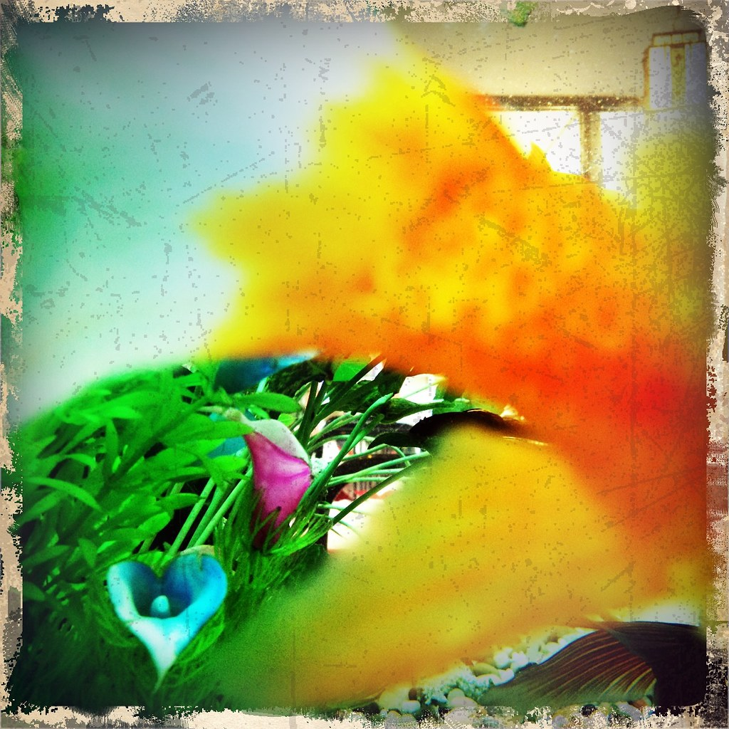 The World\'s Best Photos of goldfish and iphone - Flickr Hive Mind