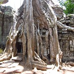"Tree Roots and Ruins <a style=""margin-left:10px; font-size:0.8em;"" href=""http://www.flickr.com/photos/14315427@N00/7113104801/"" target=""_blank"">@flickr</a>"