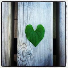 IMG_8142 (Christiangr) Tags: hoja love madera banco amo urgul