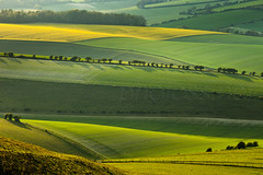 Rawhide (S l a w e k) Tags: uk trees england green grass yellow rural landscape sussex countryside nationalpark spring afternoon britain country east hills kingston telephoto rolling southdowns lewes bucolic undulating rapeseed hawthorns falmer