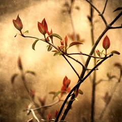 Spring's Serenade Texture