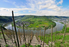 Riesling vinyards at heart of the winding Moselle River (Bn) Tags: blue sky panorama horse mountain nature water ecology river germany landscape geotagged deutschland shoe vineyard spring topf50 scenery wolf day village wine cloudy path panoramic vineyards crop grapes vista environment crops winding agriculture curved viewpoint uturn topf100 environmentalism grape mosel riesling ecosystem rheinlandpfalz slopes moselle vinyards krv agronomy moesel rhinelandpalatinate krov ubend 100faves 50faves winegrowing fruitcrops panview geo:lon=7108154 wijnleerpad geo:lat=49985973