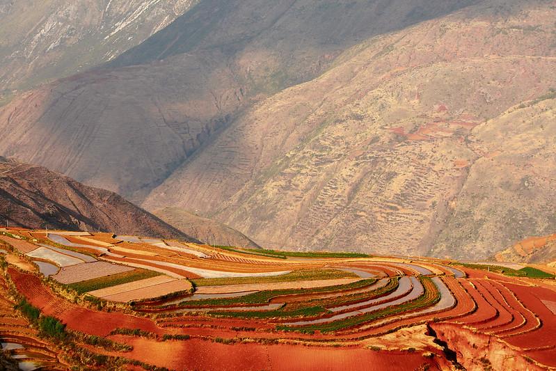 Terrazas Cultivos China