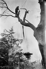 Timber! (Matthew Trevithick Photography) Tags: blackandwhite ontario tree film 35mm person backyard december matthew timber scan cutting negatives trevithick 2011 portfranks matthewtrevithick mtphotography