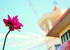 wesak (cathfooey) Tags: lotus wesak