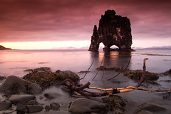 Hvtserkur (Addi Viggs) Tags: sunset seaweed rock ancient treebranch hnavatnsssla canonefs1785mm vatnsnes hvtserkur norurland canoneos500d cokinndfilter cokinred leesoftgrad
