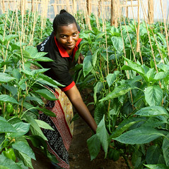 Chairwoman Rose Peter of the Upendo Women Growers Association (USAID Africa) Tags: usaid africa tanzania agriculture feedthefuture women farmers incomes livelihoods seeds irrigation cooperative unitedstatesagencyforinternationaldevelopment subsaharanafrica subsaharan internationaldevelopment international development