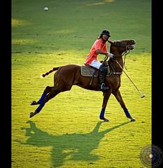 Polo (Usman Hayat) Tags: horse photography nikon sigma 50500 polo hayat d800 usman uhayat
