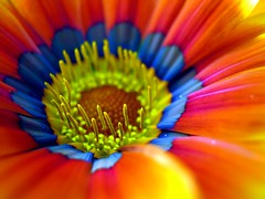 psychedelic (SS) Tags: camera blue light red italy orange white flower detail macro nature colors beautiful yellow composition contrast canon photography spring focus soft mood glow view purple angle bokeh pov year perspective may gimp powershot spicy framing fiore bianco comments lazio celeste a480 fleursetpaysages