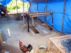 IMG_5302fr (Mangiwau) Tags: indonesia gold mercury air traditional mining rush illegal mineral exploration indonesian emas frenzy alam kantor peti nur alluvial rumbia raksa kendari dulang sultra eksplorasi gubernur pertambangan merkuri colluvial bombana