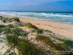 OA_ES_14867 (Oriol Alamany) Tags: espaa beach islands spain sand europa europe mediterranean mediterraneo ses playa es islas baleares balearic illes trenc