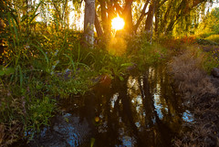 amongst the alamos. (ANOXLOU) Tags: trees sun water argentina digital canon photography travels southern mendoza knowledge rays tunuyan anoxlou