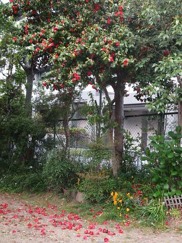 落花の風景