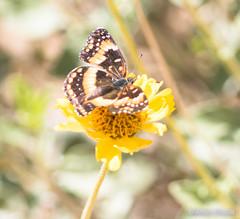 _MGL6016 (Sphinxa) Tags: california unitedstates yuccavalley