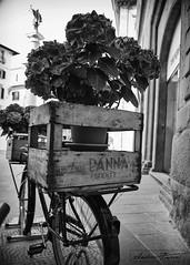 Fiori a Firenze in black & white (Fiorry) Tags: flowers flower nikon d750 bici firenze fiori byke bicletta