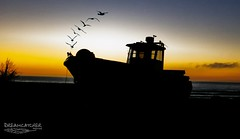 Taking flight (Dreamcatcher photos) Tags: ocean sunset wild orange beach silhouette southafrica boat seaside fishing dusk seagull flight westcoast soe westerncape elandsbaai seasidevillage dreamcatcherphotos