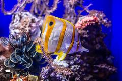 5D__5452 (Steofoto) Tags: genova porto pesci acquario darsena crostacei rettili cetacei molluschi