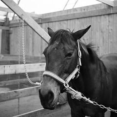 Rumba (Richard Wintle) Tags: blackandwhite bw 120 film monochrome zeiss mediumformat square f45 squareformat hp5 mf ikon ilford rollfilm nettar adox adonal novaranastigmat 51516 75cm