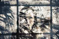 Through Her Window (vnstudios) Tags: woman double exposure art artistic female body face tree landscape silhouette branches leaves window reflections glass